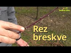 Rez breskve - YouTube Youtube, Gardening, Lawn And Garden, Youtubers, Youtube Movies, Horticulture