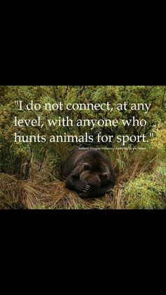 And to the bullshit argument that the money from trophy hunting actually helps the animals, very little of it goes to conservation & animals, and way more is made off non lethal nature/animal viewing, so quit justifying this sick 'sport'! Beautiful Creatures, Animals Beautiful, Hello Beautiful, Beautiful Life, Feral Heart, Animals And Pets, Cute Animals, Amor Animal, Vegan Quotes