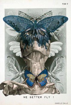 Anatomical collages - Skullspiration.com - skull designs, art, fashion and more