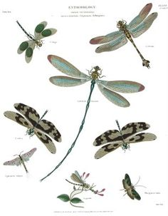 my second and third book will introduce two newbies.  One being a dragonfly.  Many hours are spent in the library and online researching how I want them illustrated!  Pinterest is going to save me lots of time!1