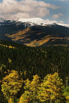 Fall Color on Gold Hill, Red River Valley, New Mexico   by Ron Weathers
