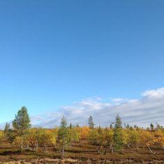 Autumn in Kaunispää | saariselka.com, #saariselka #ruska #saariselkabooking #saariselankeskusvaraamo #astueramaahan #astuerämaahan #stepintothewilderness