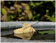Frelinghuysen Arboretum, Whippany NJ  #krystalpennellphotography www.facebook.com/krystalpennellphotography