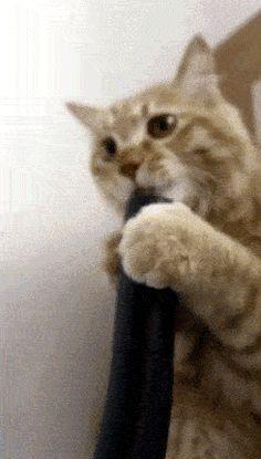 Este gato que só quer saber como as coisas funcionam.