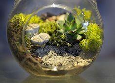 how to grow moss indoor terrarium ideas #outdoors #moss #garden