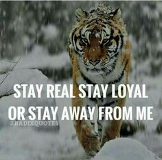 Tiger Quotes, Lion Quotes, Animal Quotes, Motivational Quotes For Life, Meaningful Quotes, Positive Quotes, Inspirational Quotes, Fearless Quotes, Meaningful Pictures