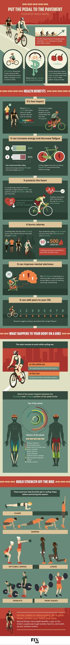 Learn how biking affects each muscle in your body, and how quickly you can burn calories! #Biking #Fitness