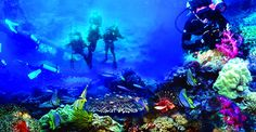 bunaken again :D I must visit this diving resort, someday :D