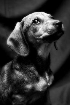 Puppy portrait.