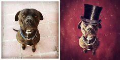 Surreal Dog Photography by Sarolta Ban