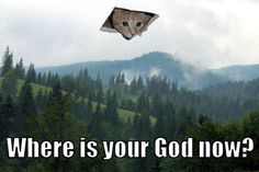 Ceiling Cat is watching you.