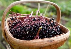 Flu Remedies Elderberry Syrup: the Deliciously Sweet Cold and Flu Remedy That Works - Organic Authority Elderberry Uses, Elderberry Honey, Elderberry Recipes, Anti Viral Foods, Dried Berries, Natural Cold Remedies, Homemade Wine, Flu Remedies, Herbalism