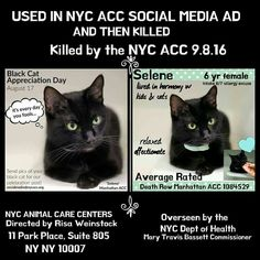 #NYCACC