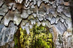 Ruakuri walk 45 min return Glowworms illuminate the banks of the track at night. Near Waitomo Caves in New Zealand