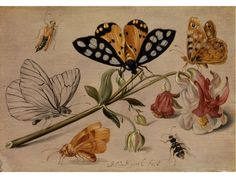 Jan van Kessel the Elder,  1626 - 1678   Pair of paintings  STILL LIFE WITH INSECTS AND AQUILEGIA and  STILL LIFE WITH INSECTS AND FORGET-ME-NOT