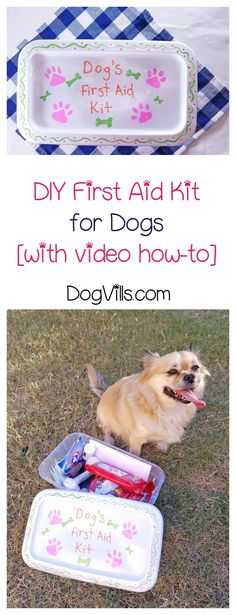 Want to make a DIY first aid kit for your dog? It's easier than you think! Check out our tutorial!