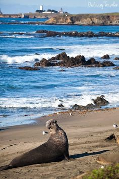 A California Hwy 1 Itinerary for Wine & Beer Enthusiasts - Plus Where to See Elephant Seals!