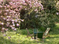 Grandchester Orchard. Cambridge, England. Where T.S. Elliot and Virginia Woolf frequented to write with tea, a scone, jam and clotted cream.