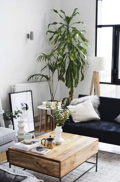Mature plants in a living space | The Lovely Drawer #rusticcouch (rustic couch)