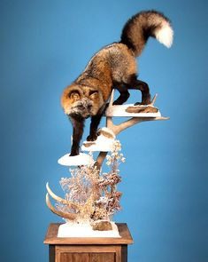 This stunning cross fox from the 2008 National Taxidermists Association convention won the Van Dyke's Award, the North American Champion Small Mammal award, and the WASCO Award for the most artistic entry.