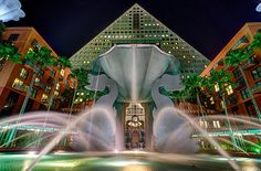 Dolphin Swan Hotel in Disney World Disneyland Hotel, Hong Kong Disneyland, Disney World Hotels, Disney Resorts, Disney Cruise Line, Disney Parks, Swan And Dolphin Resort, Swan Hotel, Theme Hotel
