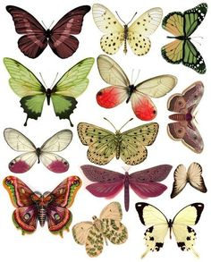 Swirlydoos: Forums / Images & Graphics / a LOT of Butterflies on this page Vintage Butterfly, Butterfly Art, Paper Butterflies, Butterfly Mobile, Butterfly Images, Paper Art, Paper Crafts, Motifs Animal, Beautiful Butterflies