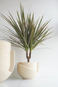 Tabletop Ceramic Planter