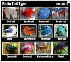1000 images about all about home aquariums on pinterest for What type of water do betta fish need