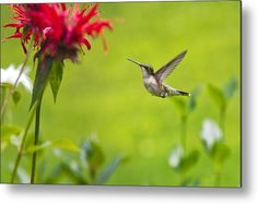 Happiness Hummingbird Garden Metal Print by Christina Rollo.  All metal prints are professionally printed, packaged, and shipped within 3 - 4 business days and delivered ready-to-hang on your wall. Choose from multiple sizes and mounting options.