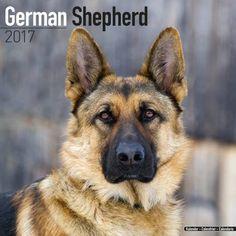 Avonside Hunde-Kalender 2017Avonside Hunde Wandkalender 2017: German Shepherd - Deutscher Schäferhund