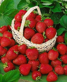 Growing Strawberries At Home - Flowers And Gardens Strawberry Plants, Strawberry Fields, Grow Strawberries, Fruits Basket, Fruits And Vegetables, Fruit List, Home Flowers, Weird Food, Red Fruit