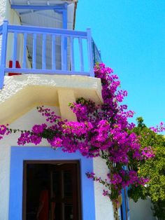 bougainvillea love
