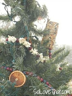 outdoor christmas tree for the birds decorated with edible - Outdoor Christmas Tree Decorations For Birds