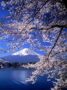 オールポスターズの「Cherry Blossoms and Mt. Fuji」写真プリント