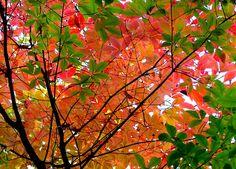 Pink Autumn by love_child_kyoto, via Flickr