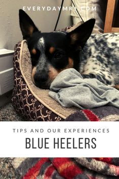 Madison Rose, Cattle Dogs, Challenges, Posts, Learning, Blog, Animals, Messages, Animales