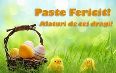 Wishing all of our community a very Happy & Peaceful Easter Easter Breaks, Happy Easter, Pumpkin, Mai, Celebrations, Community, Gardening, Holidays, Book