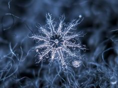 Alexey Kljatov is a Moscow-based photographer who takes a special interest in shooting snowflakes. He does a lot of work in post-production, adding colour or even working with multiple pictures to create a single composite image of a flake.