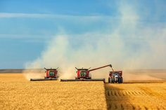 Two combines (and the farmers who pilot them) and a tractor pulling a gravity wagon alongside are seen here cutting wheat in the fields north of Havre Montana.  #Agriculture #HavreMontana #Montana #MontanaPhotographers #CaseIH #Wheat #Farming #FarmPics #Equipment #Machinery #Tractors #Rural #Country #Field #Grain #Agribusiness #FarmPhotography #Harvest #Farm #Work #Working by toddklassy