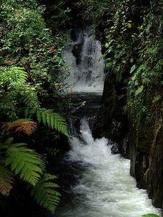 Parque Nacional Podocarpus (Ecuador)