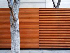 Nice contrast produced by spacing of horizontal boards on timber fence