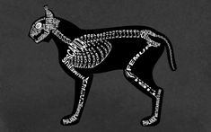 lynx lynx anatomy - Ricerca Google Lynx Lynx, Anatomy, Google, Artistic Anatomy
