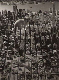 巨大化した猫が地球を襲う2012終末伝説「CATZILLA:キャットジラ」 : カラパイア