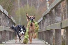 Dog boarding Port Coquitlam, dog daycare, doggy daycare Coquitlam