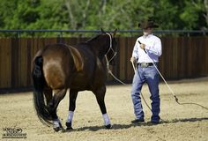Groundwork Exercise Backing Angles Goal: To be able to back the horse up in… Horse Riding Tips, Horse Tips, My Horse, Horses And Dogs, Cute Horses, Show Horses, Haflinger Horse, Reining Horses, Dressage