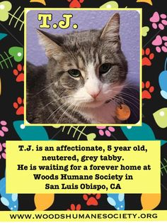 TJ is available for adoption at Woods Humane Society in San  Uzis Obispo, CA