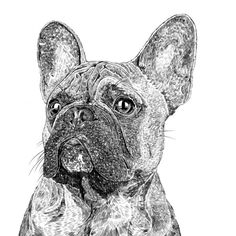 Ros Shiers - Frank The French Bulldog Print (9.225 HUF) ❤ liked on Polyvore featuring home, home decor, wall art, animals, white home decor, unframed wall art, white wall art, french bulldog home decor and animal illustration