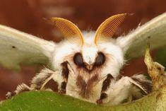 fluffy moth. | by Camera Rolls