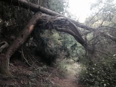 Gateway to the woods
