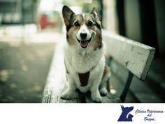 ¿Cada cuánto debo desparasitar a mi mascota? LA MEJOR CLÍNICA VETERINARIA DE MÉXICO. Si está en contacto con otros animales o si pasea y juega en lugares públicos con otros perros, se recomienda desparasitarlo mensualmente o cada 4 meses. En el caso de perros que siempre están en casa, puedes desparasitarlo cada 12 meses. En Clínica Veterinaria del Bosque, contamos con médicos especialistas para atender a tu mascota.  #veterinaria